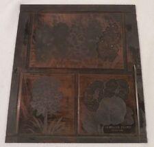 Etching Engraved Printing Machine Press Plate Stamp ~ Parrot Tulips Jonquils Blu