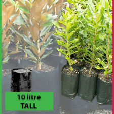 10 lt TALL Plant Bags - Pack of 100 - Black Polyethylene planter Growbags