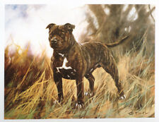STAFFORDSHIRE BULL TERRIER SBT STAFFIE STAFFORD DOG LIMITED EDITION PRINT