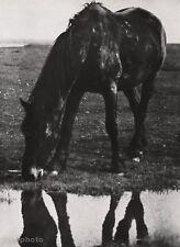 1928 Vintage Animal HORSE EQUESTRIAN Objectivity Photo Art ALBERT RENGER-PATZSCH