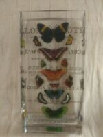 Exotic Butterflies / Papillons Exotiques Rectangular Glass Vase - French Script