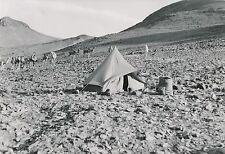 ALGÉRIE c. 1950 - Tente  Campement  Chameaux  Koudia Massif du Hoggar- Div 11379