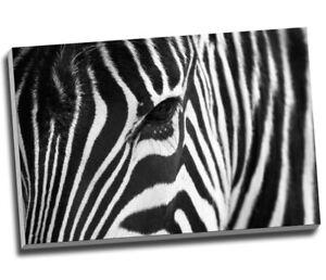 "African Zebra Black White Canvas Print Wall Art 30x20"" A1"