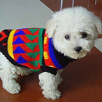 FREE SHIPPING Pet Cat Dog Knit Jumper Winter Sweater Jacket Coat Puppy Clothes