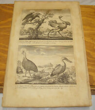 1748 Antique Print/INDIAN EAGLE, OSTRICH, EMU AND WATER PELICAN
