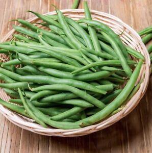 CLIMBING BEAN Blue Lake 20 Seeds HEIRLOOM vegetable garden NON-GMO summer veggie
