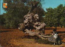 POSTAL OLIVO MILENARIO PALMA DE MALLORCA BALEARES POSTCARD POSTKARTE     CC02261