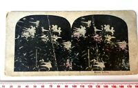 EASTER LILLIES LILIES Antique HAND COLOURED Stereoview