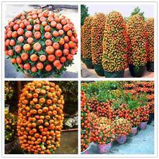20pcs/bag orange climbing orange tree seed bonsai Organic fruit seeds Like a Chr