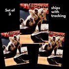 Avanti funny greeting card- Kitten in shoe-high heels Just for fun-3 SET- CUTE! photo