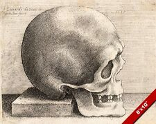 WENCESLAS HOLLAR SKULL AFTER LEONARDO DA VINCI SKETCH PAINTING CANVAS ART PRINT