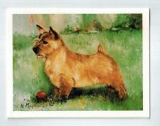 New Norwich Terrier Profile Notecard 6 Note Cards 6 Envelopes By Ruth Maystead