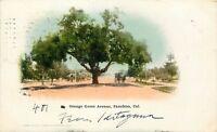 UNDBK Postcard CA D203 Cancel 1908 Orange Grove Avenue Pasadena California