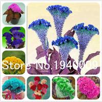 Bonsai 200 Pcs Seeds Cockscomb Celosia Mix Color Garden Plants Flowers Perennial