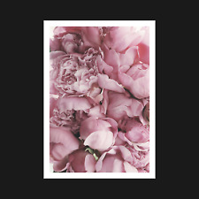 Pink Roses Poster / Print - Nature Flower Plant Wall Art Decor - A5 A4 A3