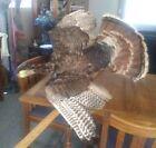 "Estate Find ~ Taxidermy In Flight Wild Turkey ~ 41 L  X 37"" W"