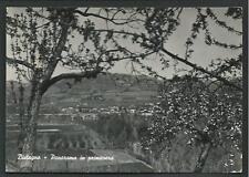 Bistagno ( Alessandria ) - Panorama in primavera - viaggiata nel 1953