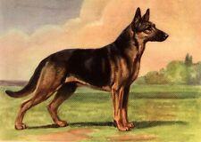 German Shepherd - Dog Art Print - Megargee Matted