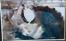"Wolves Photo ""Title Kiri & Socrates Jaw Sparring"" by Jill Moore"