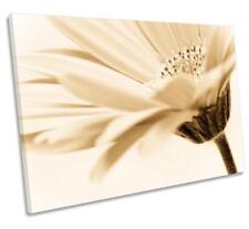 Floral Flower Cream Sepia CANVAS WALL ART DECO LARGE READY TO HANG all sizes