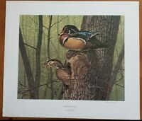 Wood Duck Art Print Larry Barton