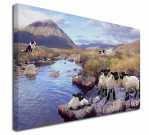 """Border Collie on Sheep Watch X-Large 30""""x20"""" Canvas Wall Art Print, AS-24-C3020"""