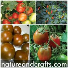 Cherry Tomatoes, Birds Eye Chillie, Black Tomatoes And Plum Tomatoes 4in A Pack