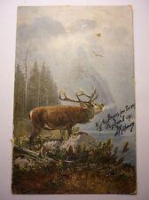 Antique Swiss Postcard Deer In Misty Forest 1902