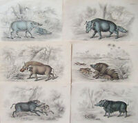 JARDINE - NATURALISTS LIBRARY - 6 COPPER ENGRAVINGS - C.1830 - FREE SHIP US  !!!