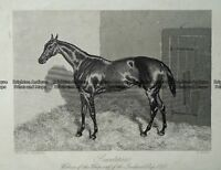 Antique Print 232-489 Saunterer, champion race horse by Hacker c,1858