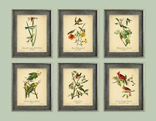 VINTAGE BIRDS PRINTS 8x10'' Botanical Poster Set Picture Wall Art Decor Audubon