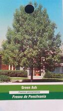 Green Ash Tree Fast Growing Live Shade Trees New Easy Hardy Healthy Landscaping
