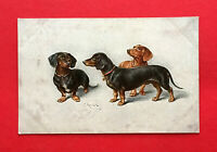 Künstler AK von C. Reichert um 1920 DACKEL    ( 50581