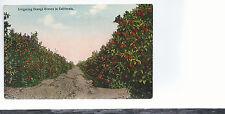 Irrigating Orange Groves in   California  Unused  1913   Postcard 524