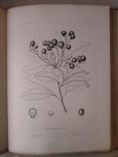 Vintage Print,PLATE 79,IRON WOOD,Silva,Trees,1st Ed.c1900