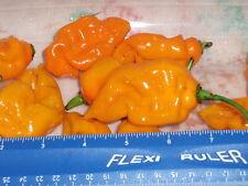 25 Fresh Premium Yellow Trinidad Scorpion Cardi Pepper Seeds From our Garden