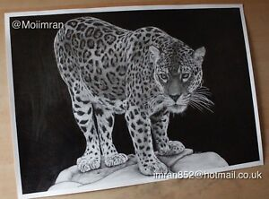 ORIGINAL Pencil Drawing of Cloudy Leopard - Animal Sketch Drawn by Moiimran