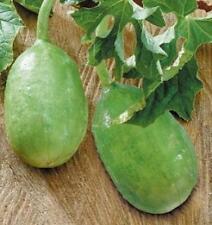 Liso Calcutta Gherkins, Cucumis anguria 5+ seeds
