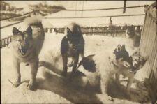 Husky Sled Dogs Polarhunde der Jungfraubahn Switzerland c1915 RPPC jrf