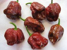 Douglah (7 pot Chocolate) Chili Peppers X 10 Semillas Super Hot