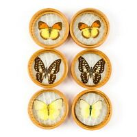 6 Vintage Pressed Butterfly Wood Bamboo Under Glass Drink Coasters W/ Holder