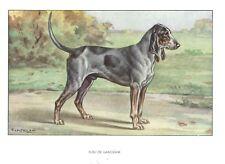 1930 Art Castellan France Dog Print Grand Bleu De Gascogne Bluetick Coonhound