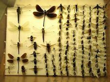 More details for storebox 6 (188) bees entomology insect lepidoptera taxidermy butterflies moths