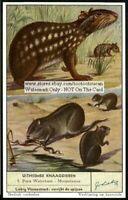 Nutria And Paca 60+ Y/O Trade Ad Card