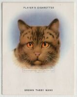 Breeds of Cats - Brown Tabby Manx Cat Feline 1930s Ad Trade Card