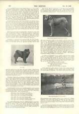 1896 Miss Decima Moore Wolfhound Pesca cirujano Maj Parke estatua Dublín