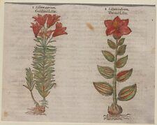 JOHN GERARD BOTANICA MATTHIOLI 1597 GIGLIO LILY LILIUM AUREUM FIORI FLOWER