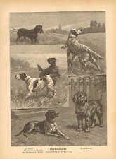 Hunting Dogs, Pointers, Retreivers, Vintage, 1888 German Antique Art Print