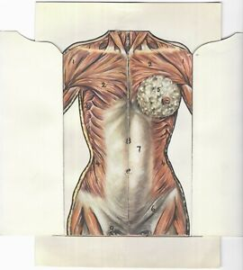 Vintage Medical Female Human Body Sectional Layered Anatomy Card Educational