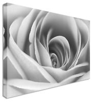 Close up Rose Petals Flowers Black and White Canvas Wall Art Picture Print
